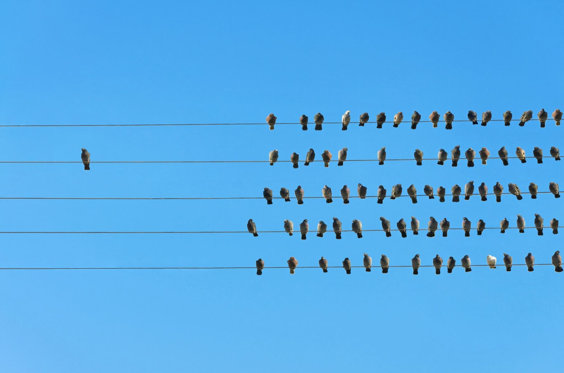 Skyepack, birds on a wire